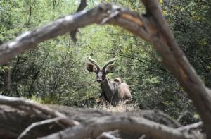 Antelope Kilimanjaro National Park